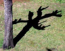 Il tempo degli alberi mutilati
